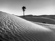 Palmeraie et Dersert